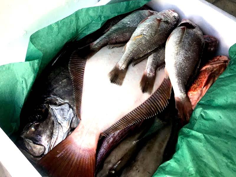 カガミダイ、ヒラメ、イシモチ、オニカサゴ、ウマヅラハギが入った鮮魚セット