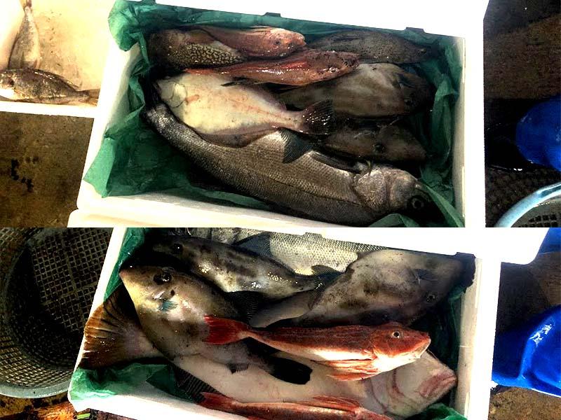 漁師直送鮮魚セットの具体例画像