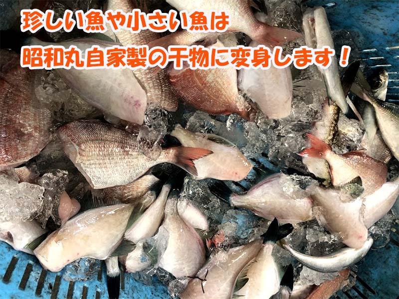 美味しい干物に姿を変えようとする新鮮な小魚