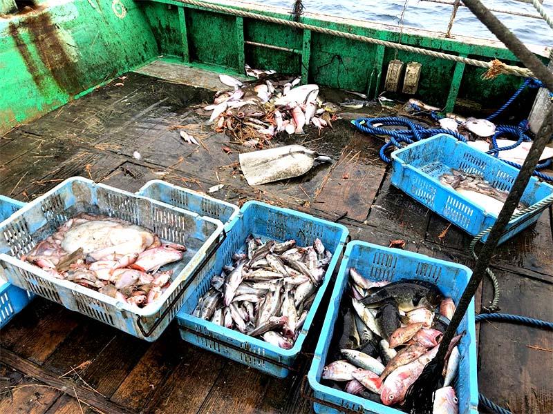 日本海新潟村上寝屋漁港で行われる板曳き網漁の風景