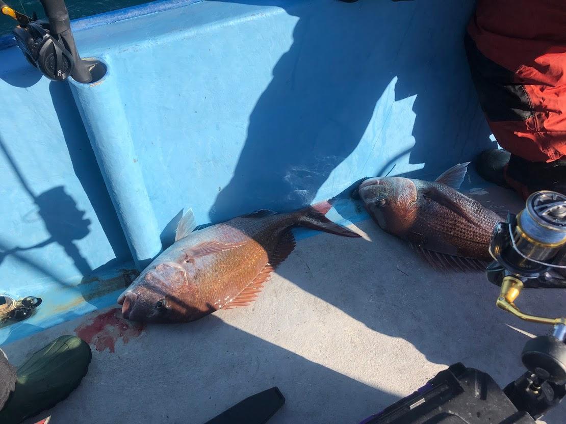 釣り桜鯛大漁