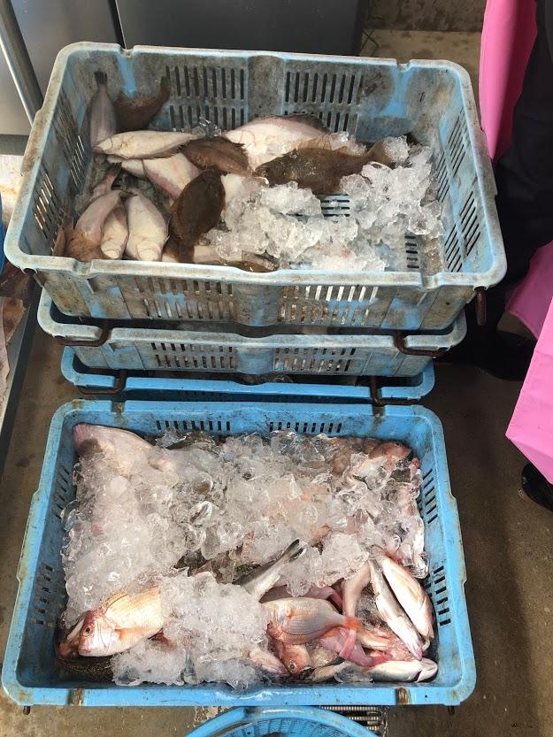 漁師直売干物の原材料となる新鮮な未利用魚